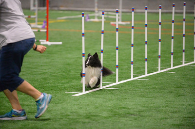 York Kennel Club AKC Agility Trial July 1-3