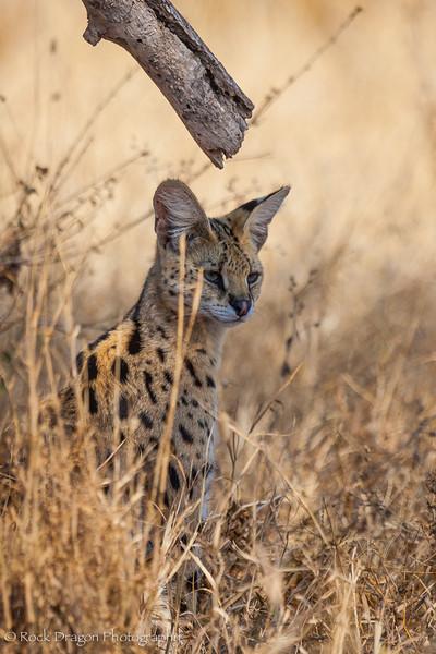 South_Serengeti-27.jpg
