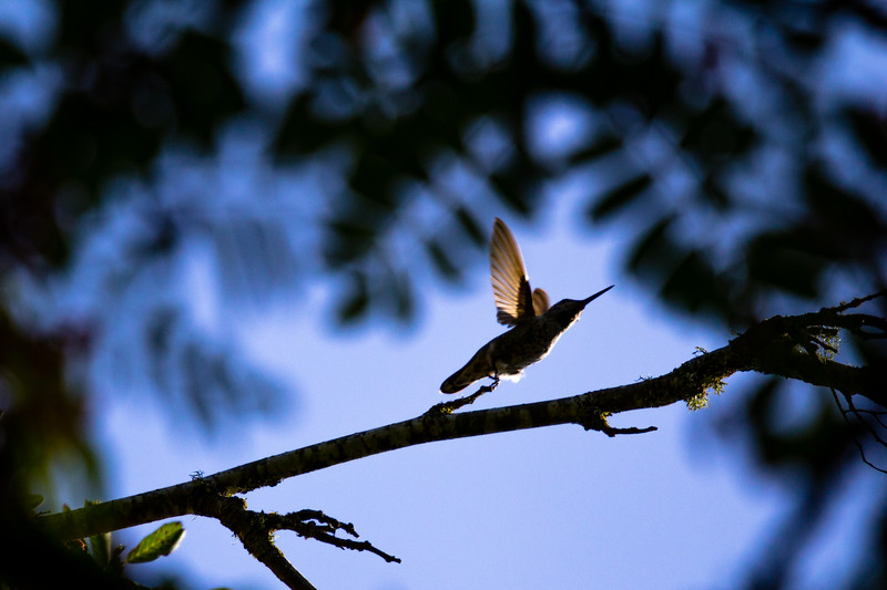 birds-1-13.jpg