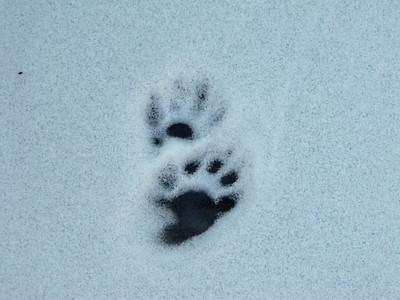 20100206 Mammal Tracks