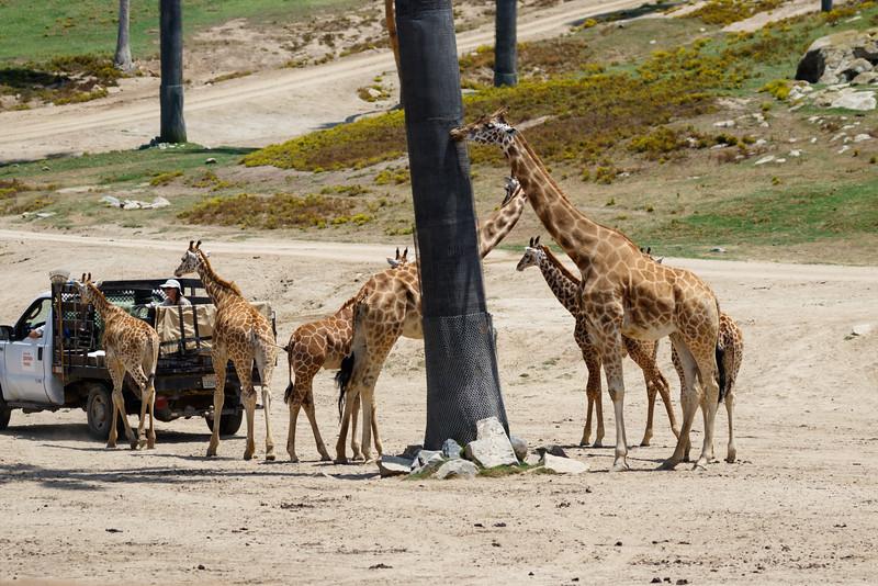 2016.06.01 Safari Park 0038.jpg