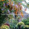 Guatemalan Garden