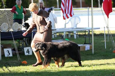 Veteran Sweeps 11yr+ Dog BMDCW 2010