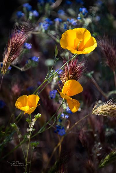 JM8_4127 Desert Flowers LPN r1.jpg