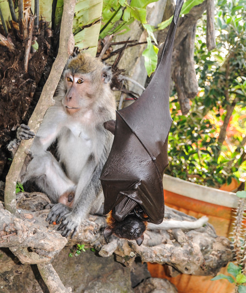 Bali Monkeys-11.jpg