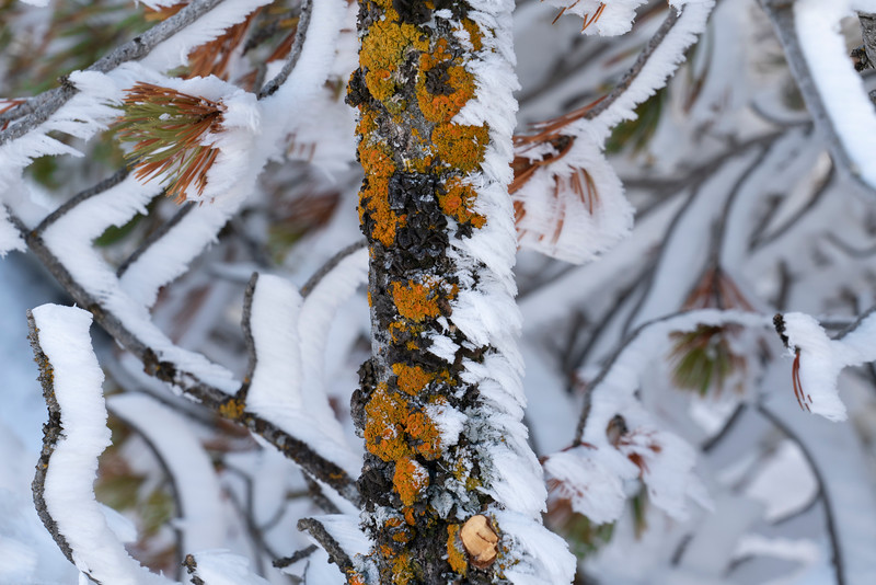 _AR71147 Frosted branch with lichen.jpg