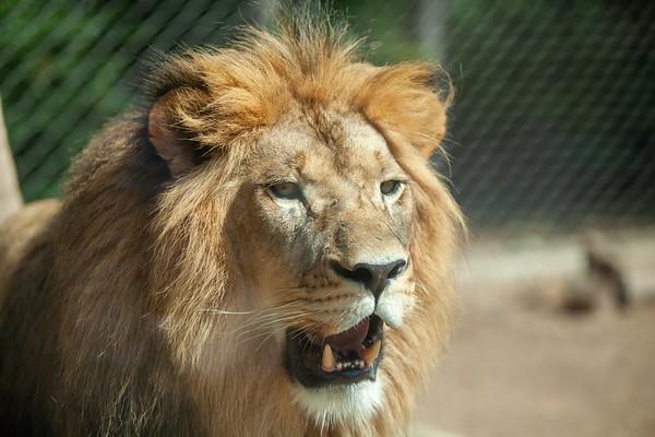 Denver Zoo August 10, 2019