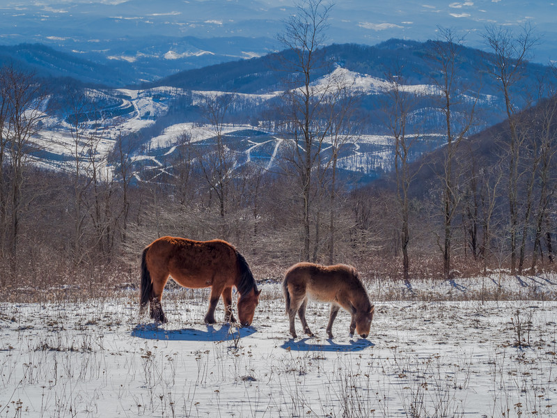 44 Mar 01 Mare and Foal Grazing (1 of 1).jpg