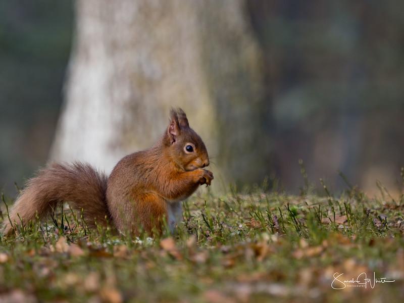 RedSquirrelBootCamp_130217_883.jpg