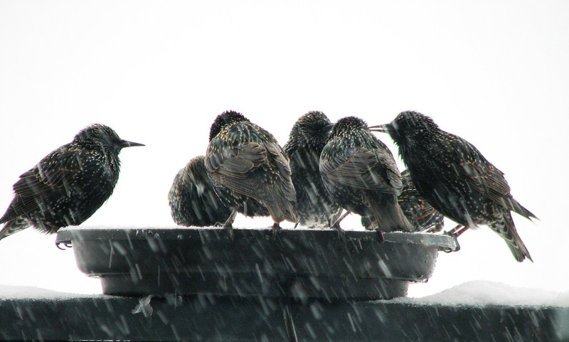 birds (187)b.jpg