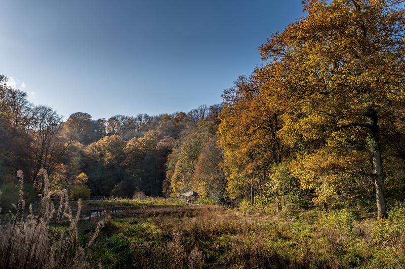 Wakehurst_Autumn-6136.jpg