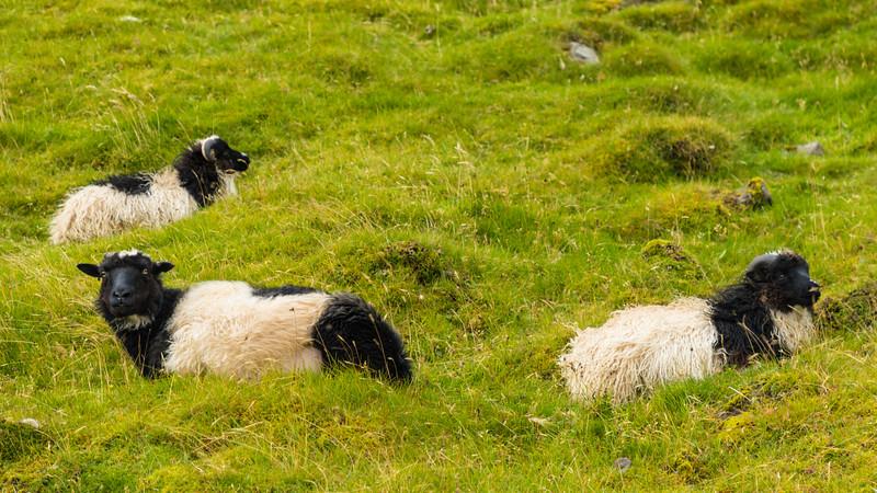 Faroes_5D4-1451.jpg