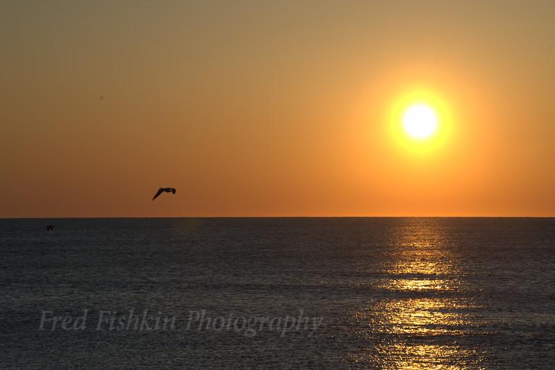 Gull at sunrise 04_30_18.jpg