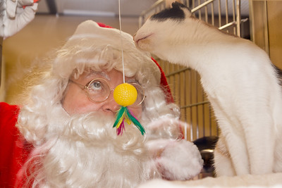 Santa visits the kitties