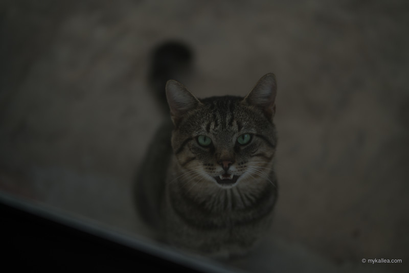 Pets-137.jpg