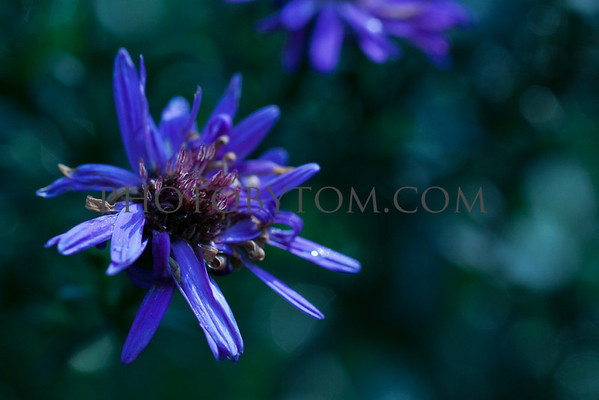 Up Close: Macro Flower Gallery