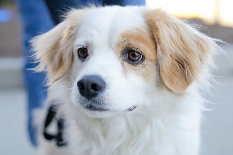 20110312 PetSmart Adoption Event-66.jpg