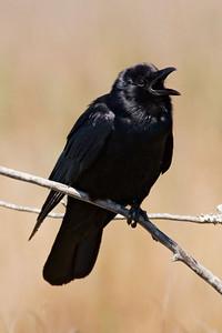 May 2, 2010 - North Carolina Birds - Part 1