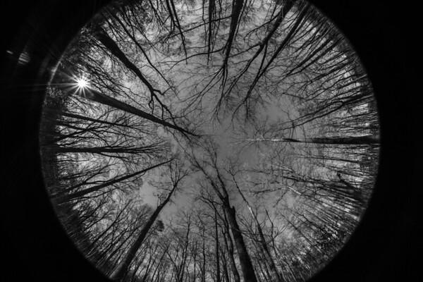 2014-02-16 Evergreen Trees Fisheye