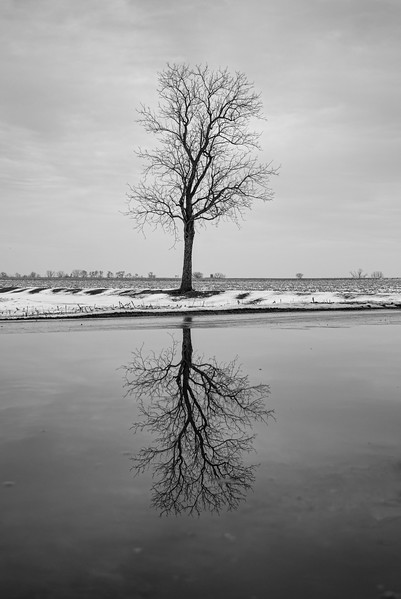 reflections - amishtown road tree(p, 254).jpg