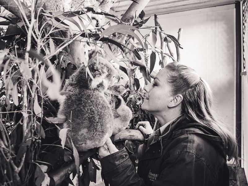 Sarah with koalas.jpg