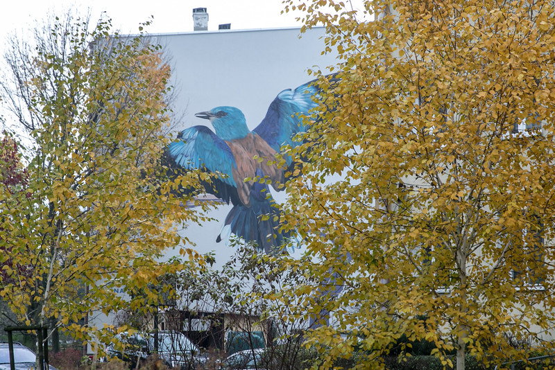 ptasie-murale-autor-wojciech-rokosz_2.jpeg