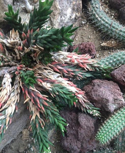 Pretty Colors Cactus.png
