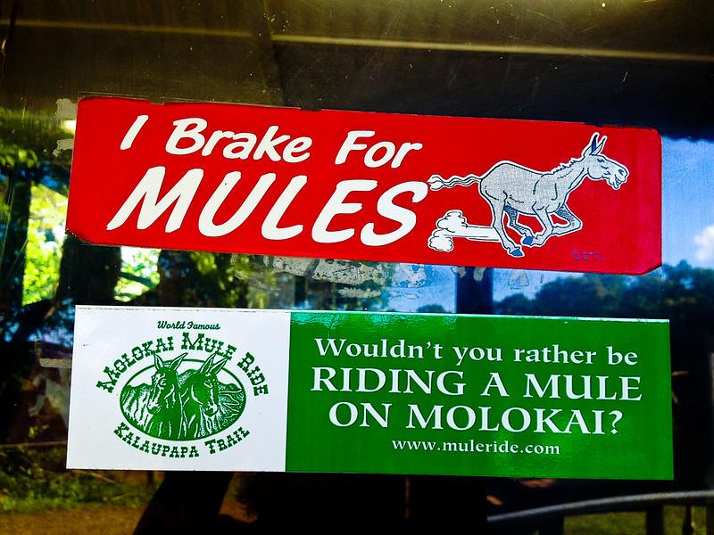 mule I break for.jpg