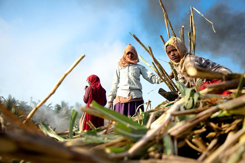 sugarcane workers Gujrat.jpg