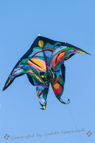 Butterfly Abstract ~ Kite Festival, Huntington Beach, CA
