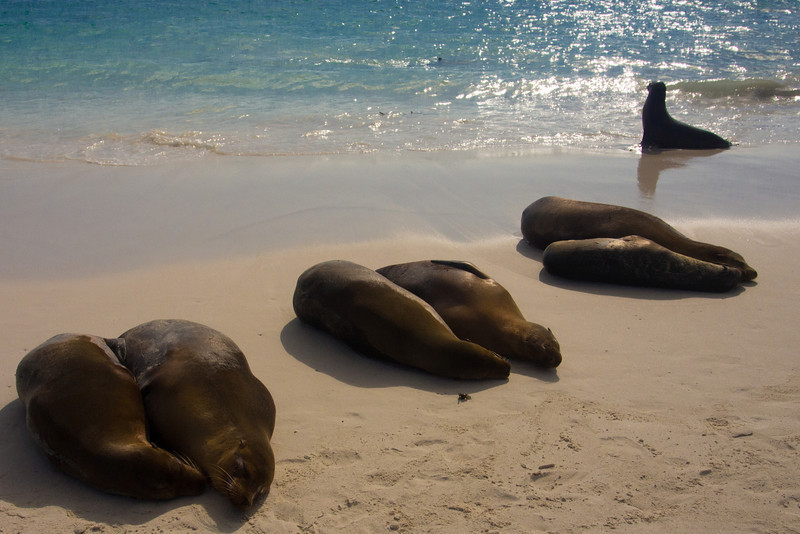 beach with sea lions in pairs.jpg