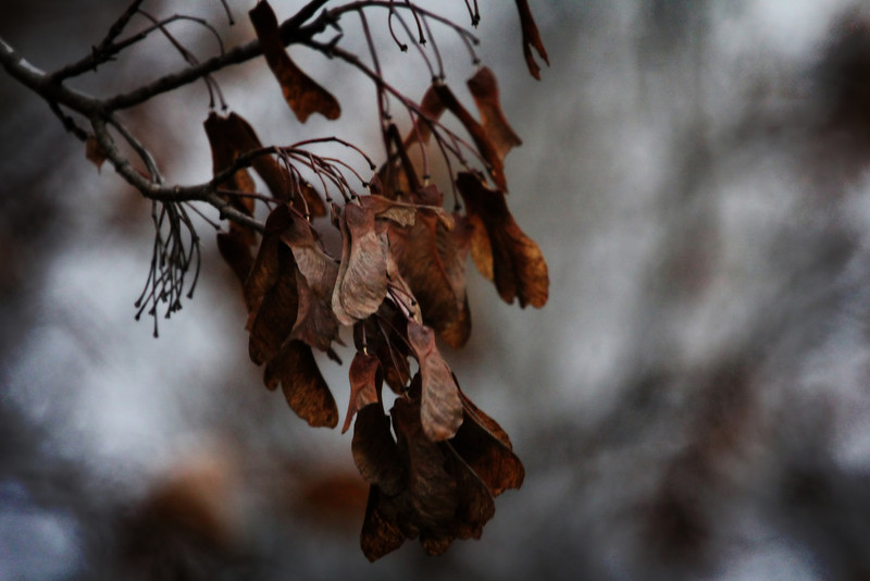 November-denoise.jpg