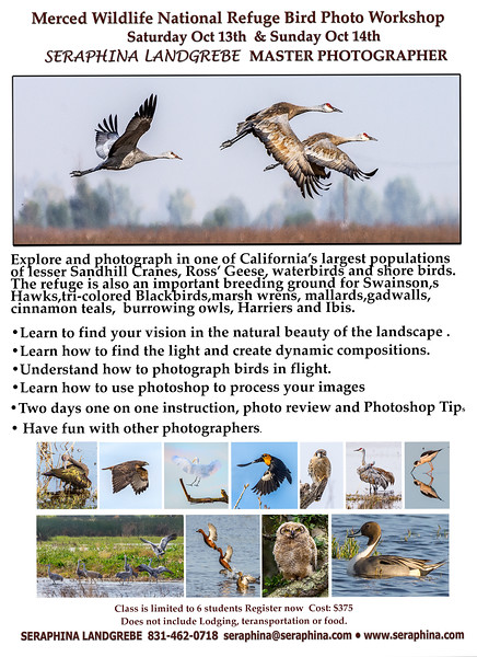 Merced Wildlife Photo Workshopb copy.jpg