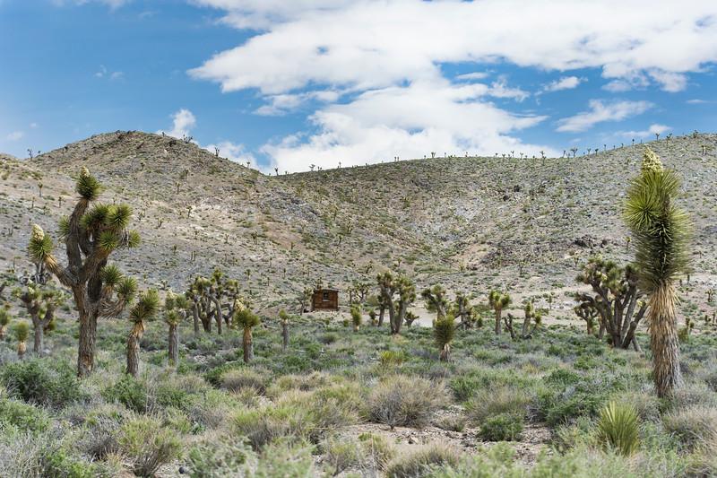 Joshua-trees-cabin-death-valley-rjdp.jpg