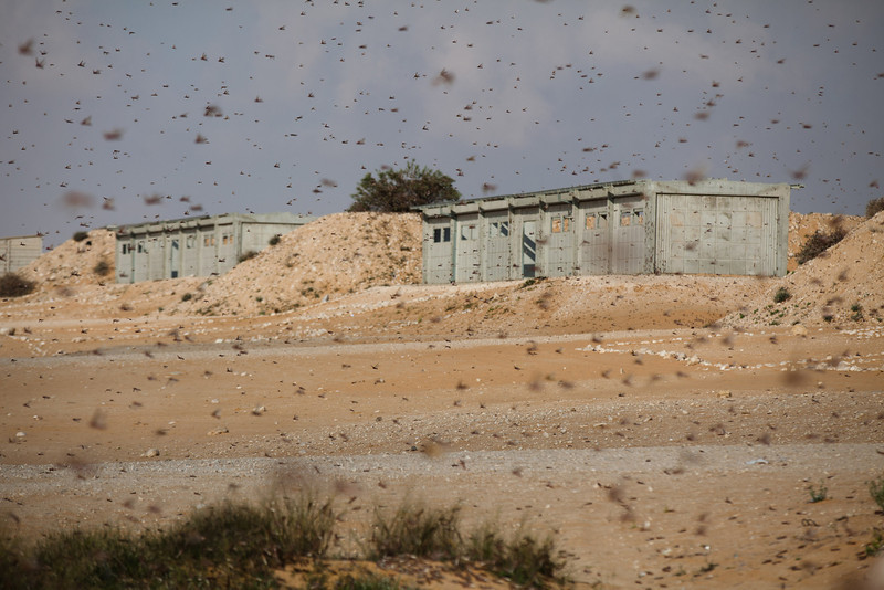 . A Swarm of locusts moves over an Israeli army fire range near the Egyptian border on March 6, 2013 in Kmehin, Israel. Egypt and Israel have been swarmed with millions of locusts over the past few days causing wide spread disturbances.  (Photo by Uriel Sinai/Getty Images)
