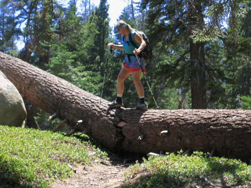 this tree was blocking the path - but Alice jumped up and slpit it in two - then she drug both halves to clear the trail - my hero