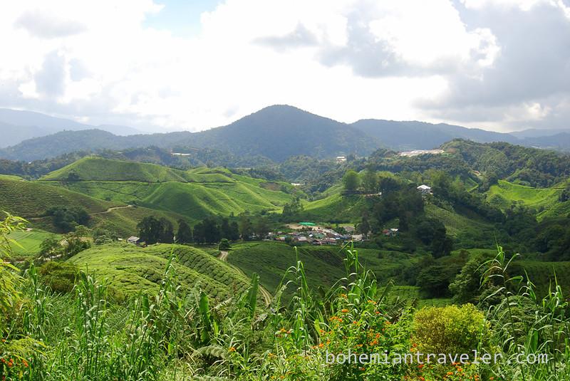 Cameron Highlands Malaysia Tea fields [Boh].jpg