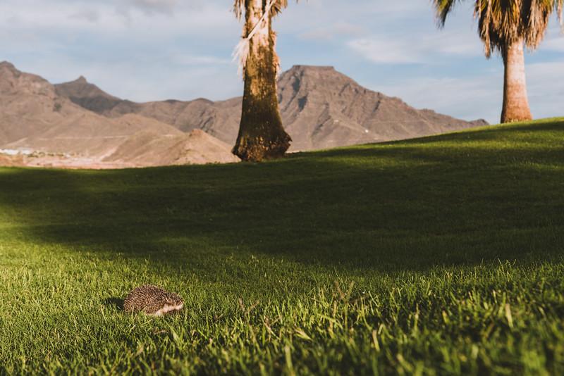 Golf Adeje_20191024_4700.jpg