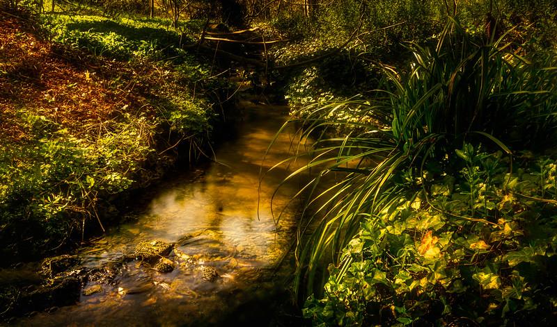 Forest Shadows-026.jpg