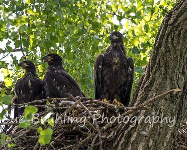 2020 Decorah Eagles