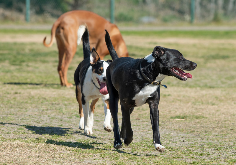 Dogs2-19-20.jpg