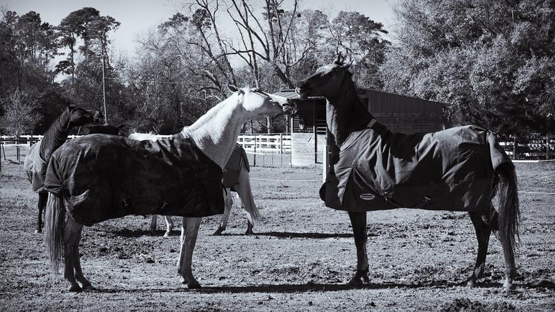Horse Frolic--2.jpg