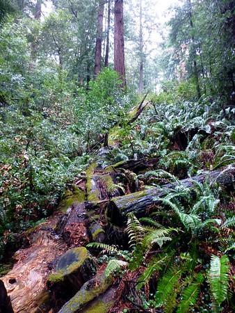 Muir Woods 2014-02-02