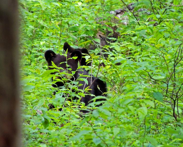 bear cub 03.jpg