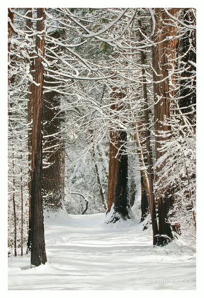 Winter Path.jpg