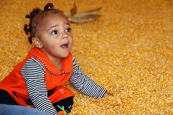 2009 October - Corn Bin
