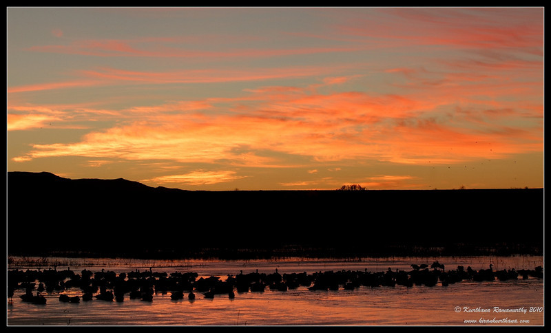 early morning clear sky before Snow Geese lift off, Bosque Del Apache, Socorro, New Mexico, November 2010