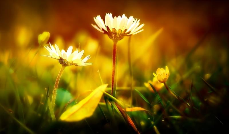 The Magic of Light-210.jpg