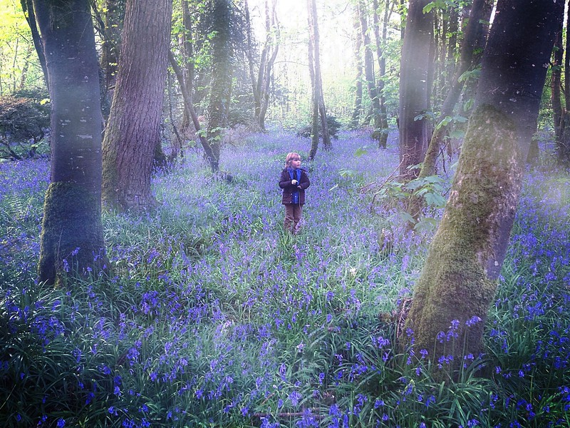 Boy In Bluebells.jpg