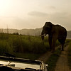 Wide angle shot of an aggressive male tusker elephant with a part of the car in the foreground